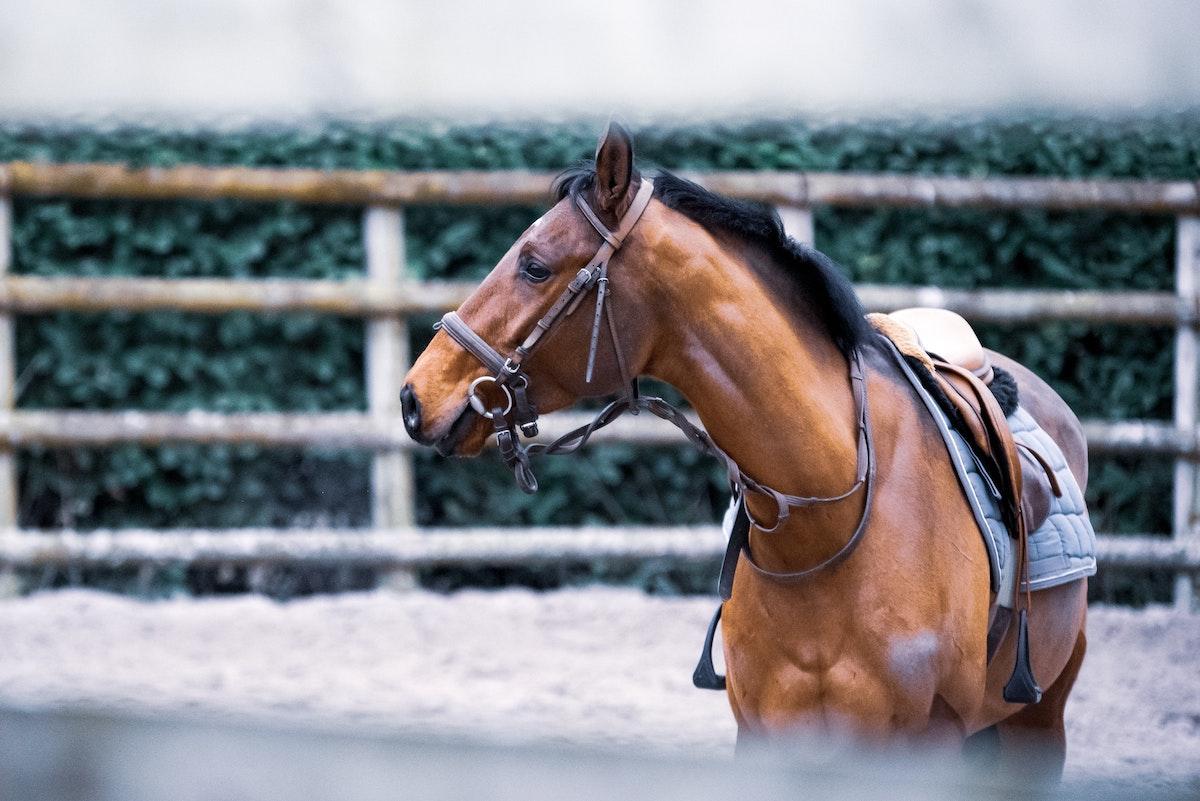 Pferdeführanlage